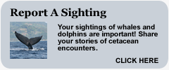link: report a sighting